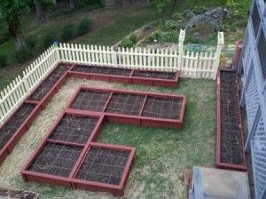 north florida vegetable gardening guide